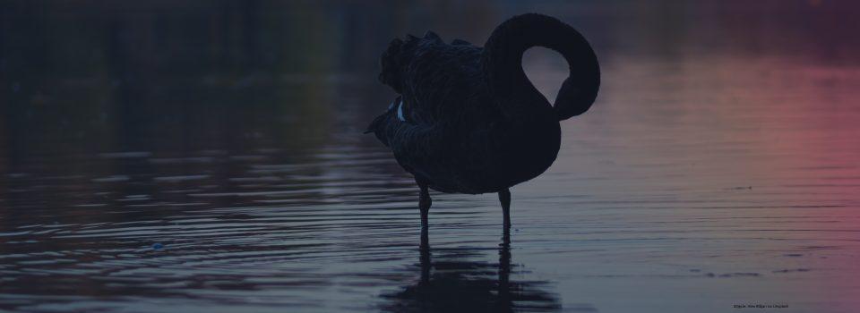 Barańczak I Czarny łabędź Czytanie To Przygoda Opinie I