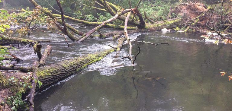 Spływ Brdą